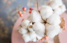 5 razloga zašto mame biraju organski pamuk
